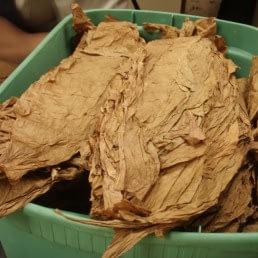 tobaccoleaves2 uai