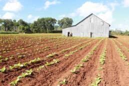 Tamboril Plantations