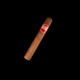 Bavaro Cigar - Robusto